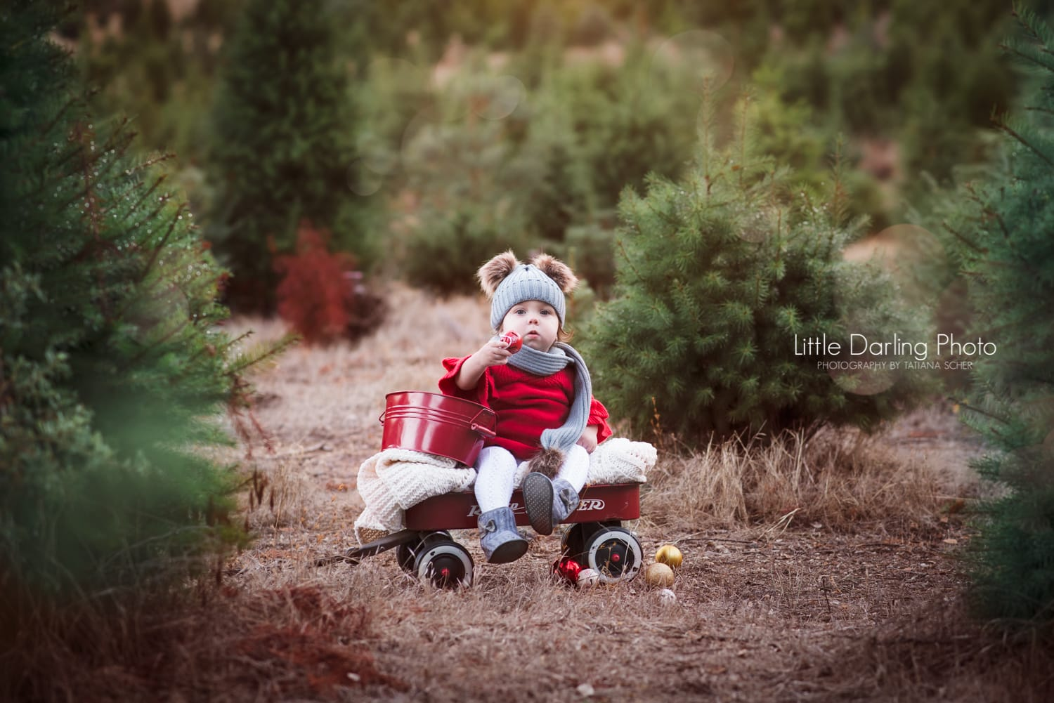 Christmas tree ranch holiday photography